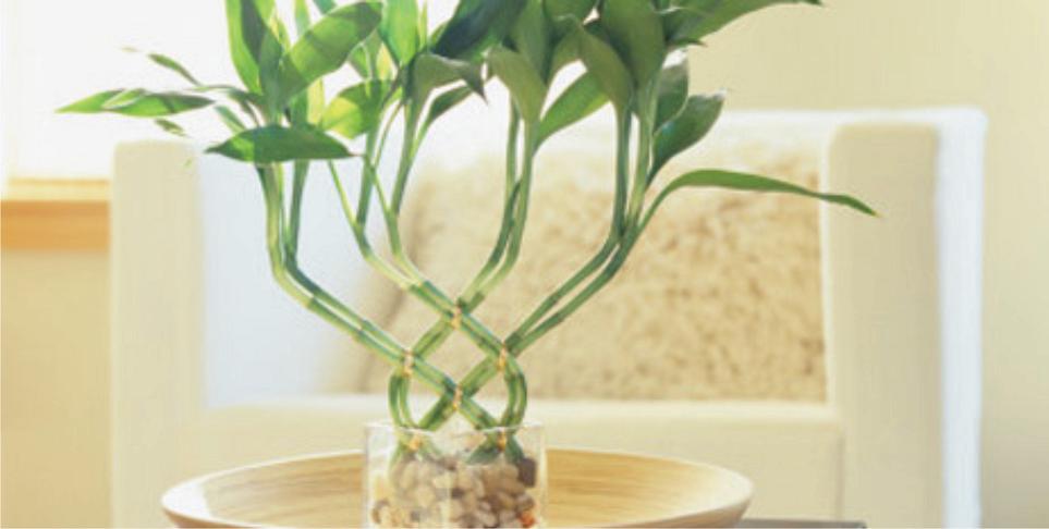 Plantas de interior que expulsan la energ a negativa for Plantas en agua interior