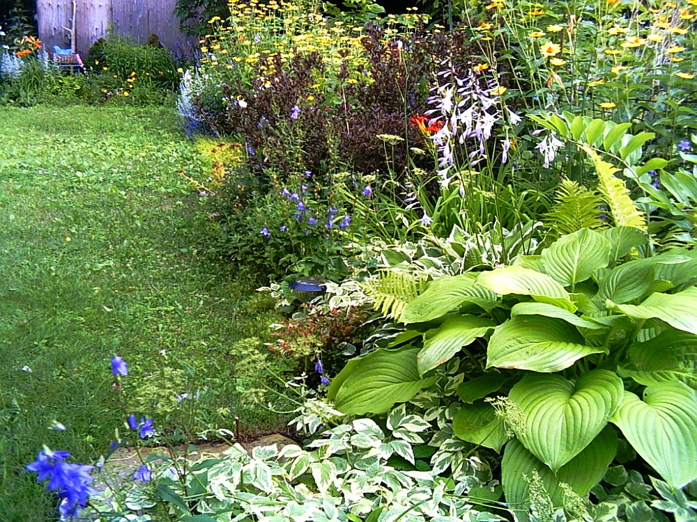 A curving border garden with hosta, goutweed, and flowering plants.