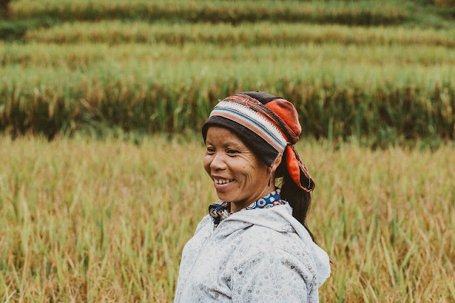 Visit Ha Giang season of ripe rice, contemplate the idyllic life 3