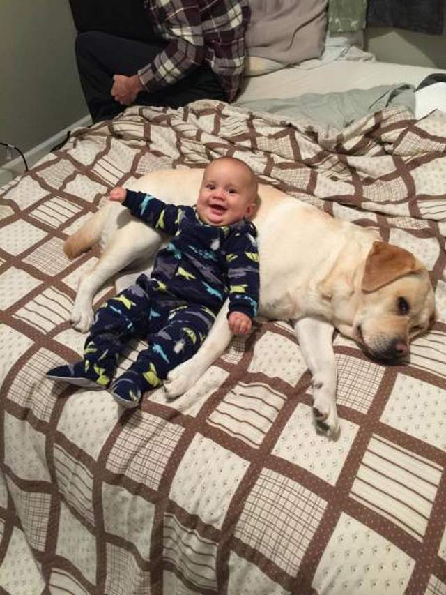 Cute dogs - part 160, dog pics, funny dog