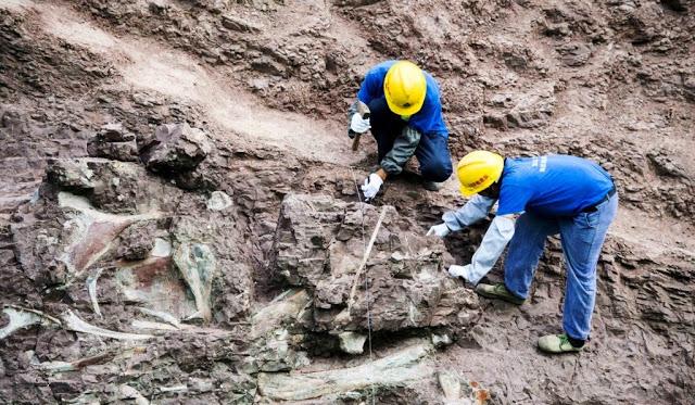 Maior parede do mundo de fósseis de dinossauros