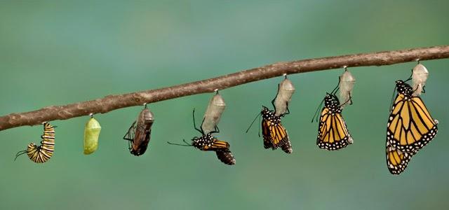 """""""Sede transformados"""" (Romanos 12:2)"""