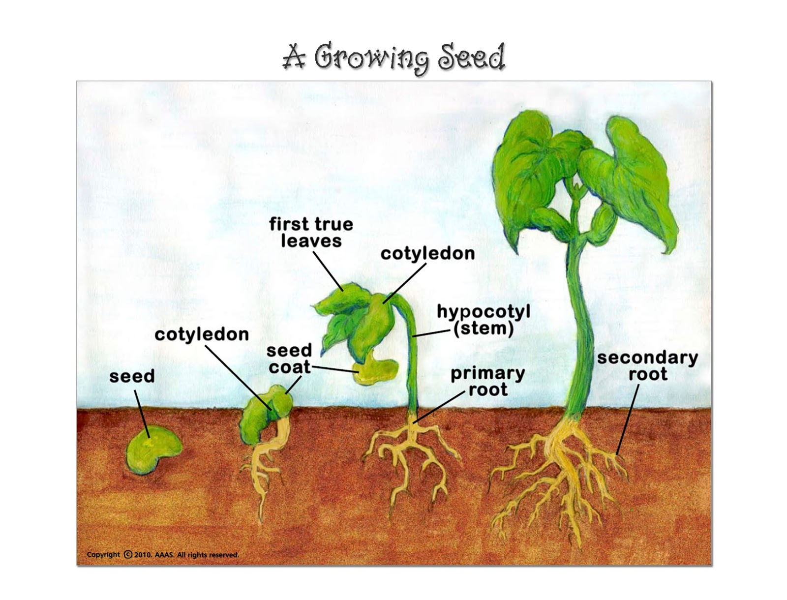 7th Grade Science Parts Of A Seed And Growing Plant