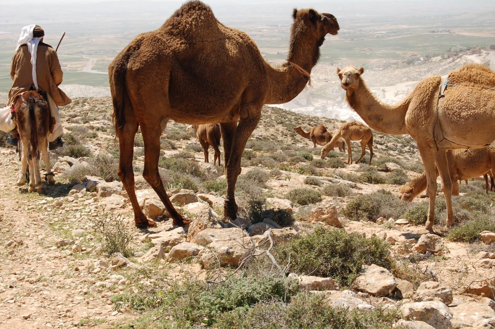 Izraelski Szlak Narodowy
