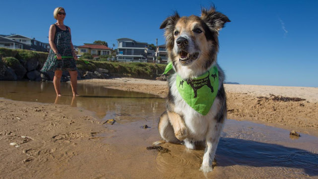 McCauleys-Beach-Thirroul-Dog-Friendly