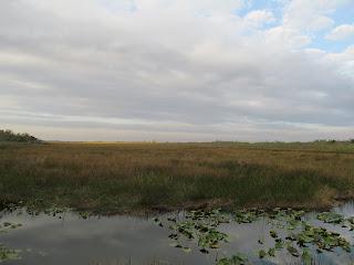Florida Everglades View