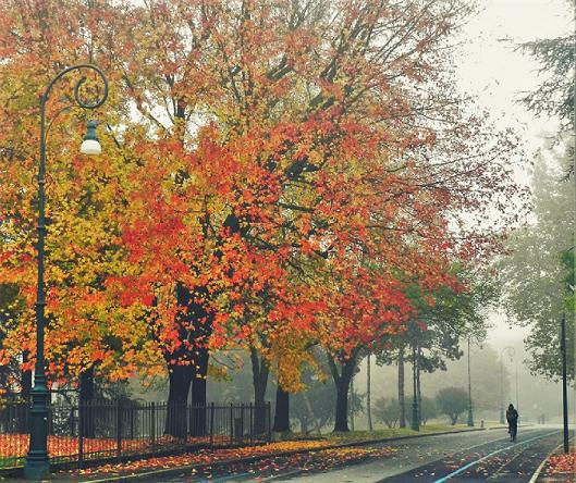 autunno a torino