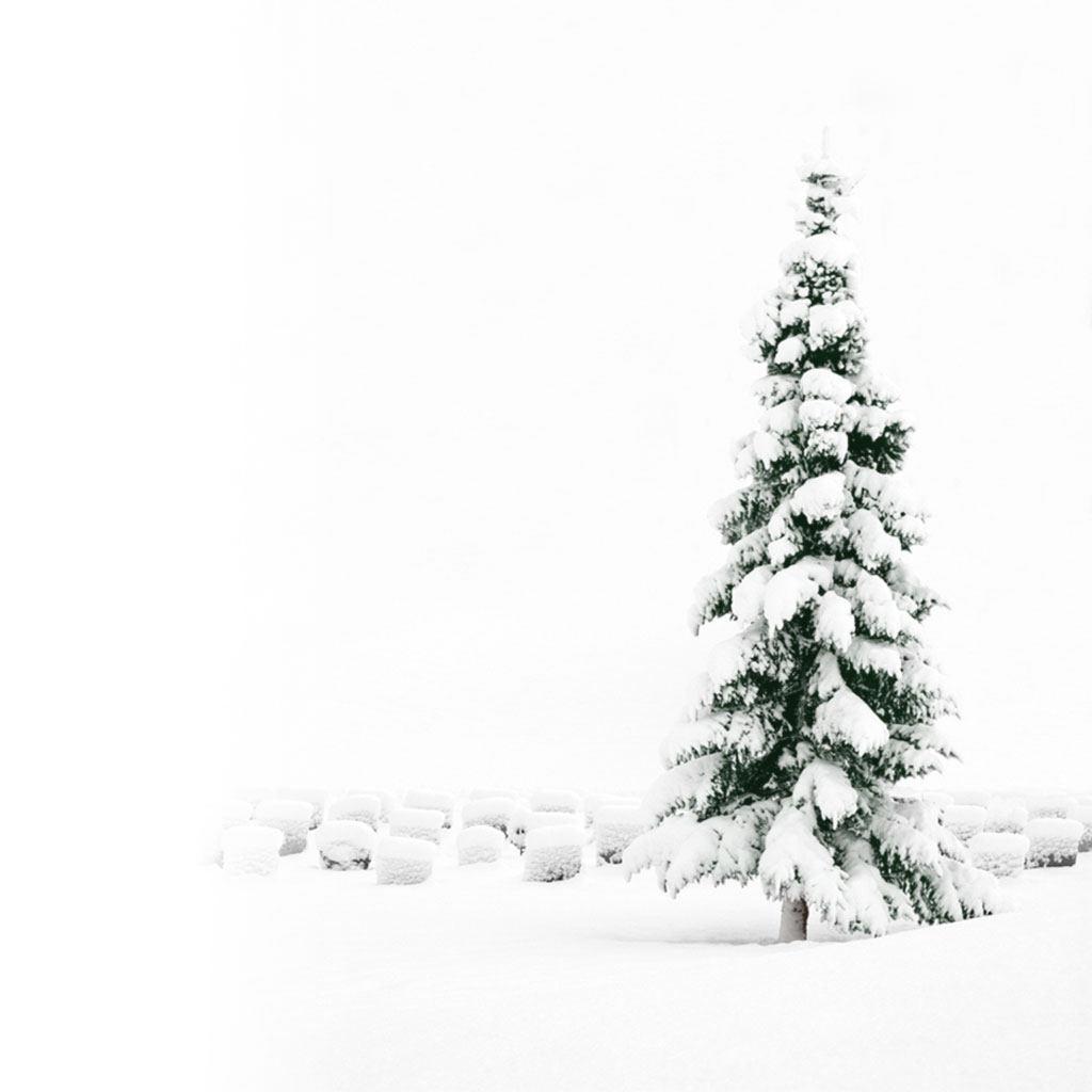 Blue Christmas Tree Wallpaper: Christmas Tablet PC Wallpapers