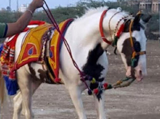 Salman Khan,buy,Horse,2 crores,owner,rejects