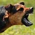 Dog dies trying to stop suicide bomber from attacking a wedding reception in Borno State