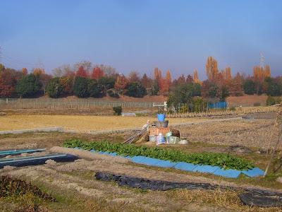 外から見た山田池公園の紅葉