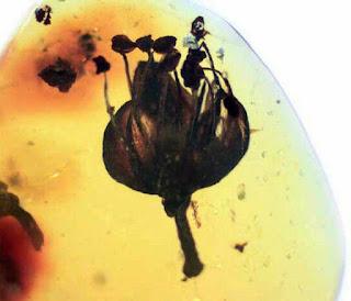 Soprendente ejemplar de ambar dominicano con inclusion de flor