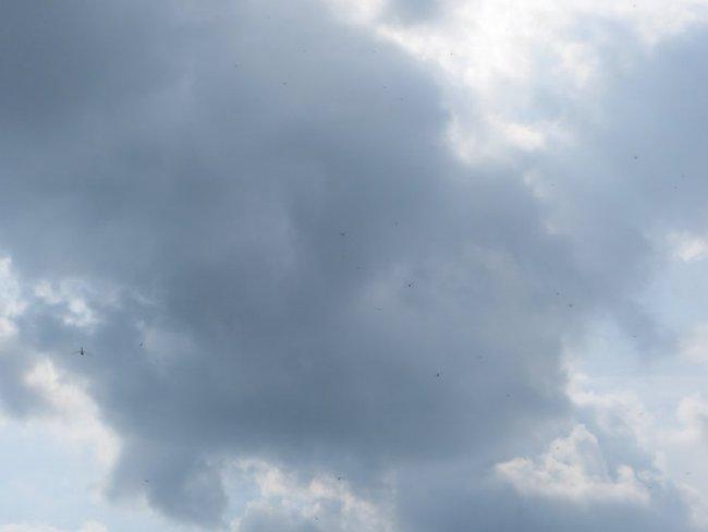 Стрекозы в небе