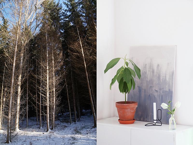 Spazieren im Wald und Dekorieren mit weißen Tulpen - Ideen fürs Winterwochenende
