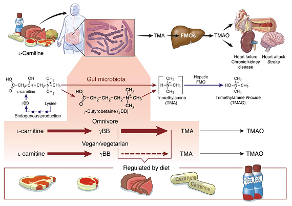 TMAO: Eggs, Meats and Your Cardio-Metabolic Health | You Can Sill Eat Eggs & Meat, If You Got 'the Right Gut Bugs' 4