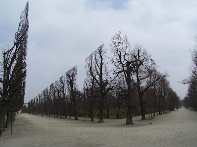 Trees In Schonbrunn