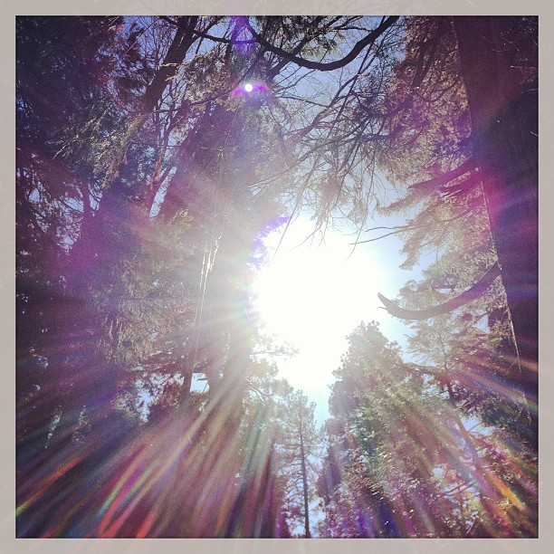 sun through the trees, naturally filtered