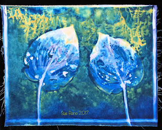 Wet Cyanotype_Sue Reno_Image 65