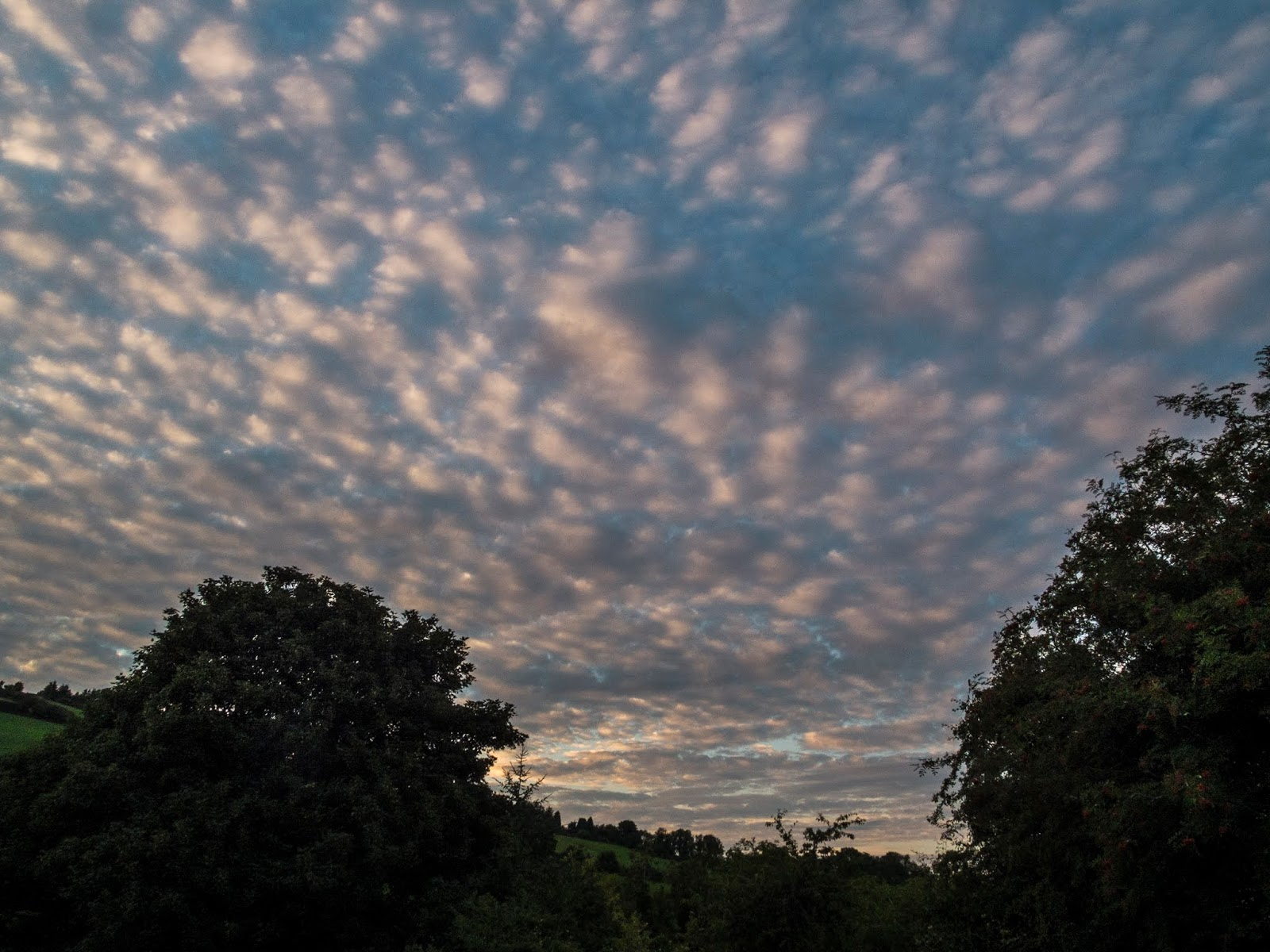 Stratocumulus sunset clouds down a valley between trees.