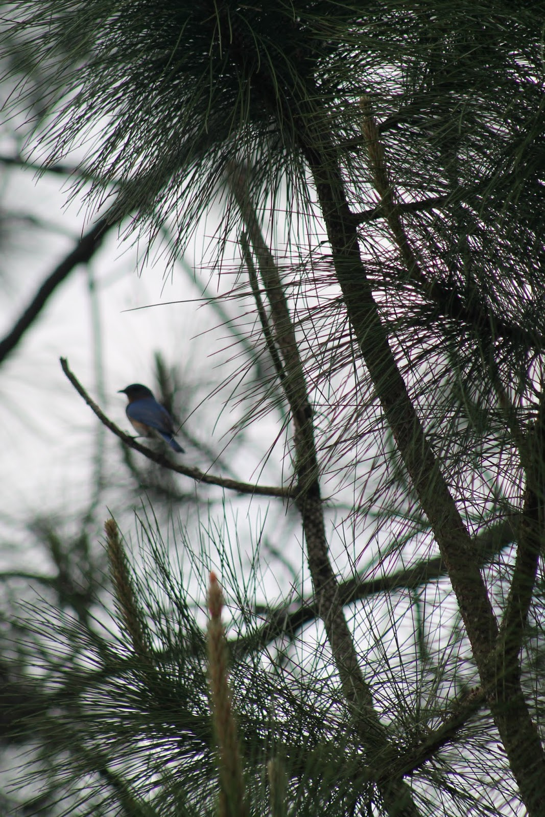 Aves y detalles del camino