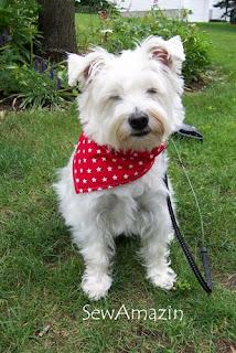 Patriotic Pup Dog Collar Slipcovers