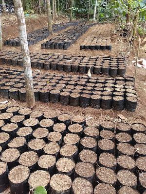 Tahap setelah pengisian tanah