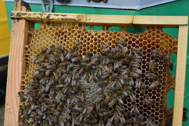 Μυστικά για ξεχειμώνιασμα μικρών μελισσιών!