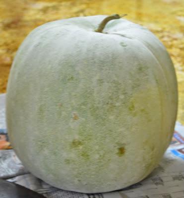 Image result for గుమ్మడికాయ