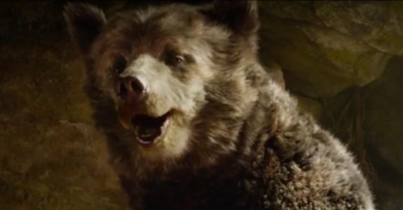 Beruang yang lucu