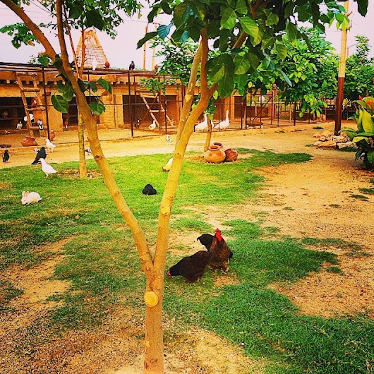BirDs iN NatUre VillAge viEw - Syed Mehndi