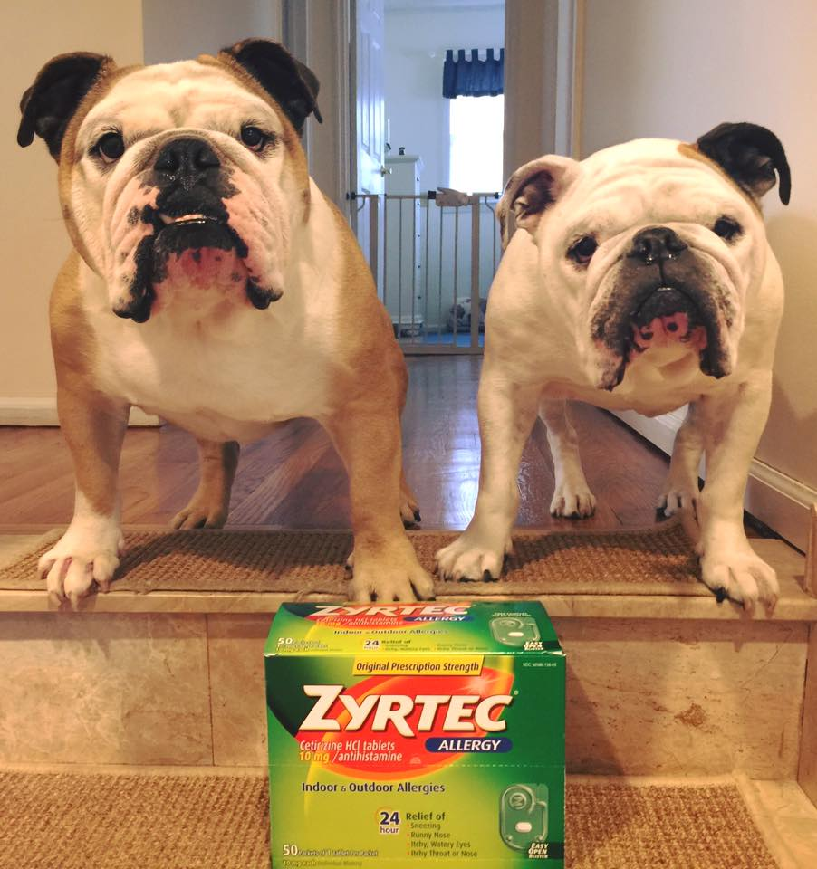 Can You Give Your Dog Zyrtec For Allergies