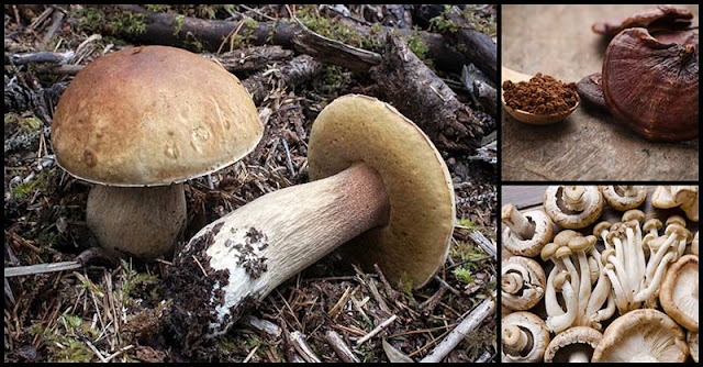 Eating Mushrooms Is A Delicious And Healthy Way Of Fighting Breast Cancer