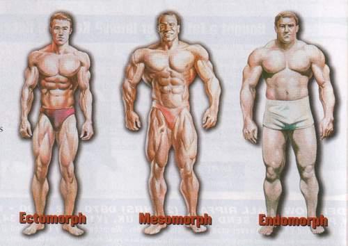 percentuale di grasso corporeo ectomorfo