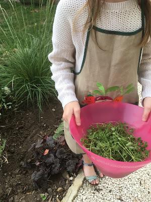 petite fille tient une salade d'herbes