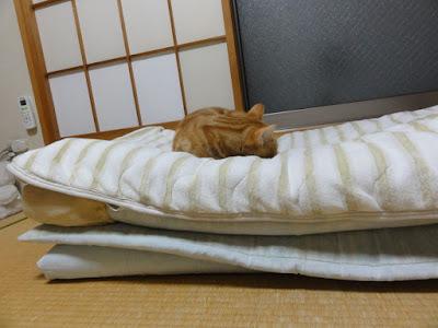 三つ折り布団を二つ重ねた上で猫が寝ています。