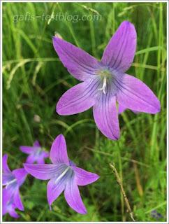 Wilde Glockenblumen
