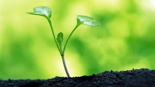 Manfaat, Fungsi Dan Peranan dan Unsur Hara Mikro Bagi Tanaman