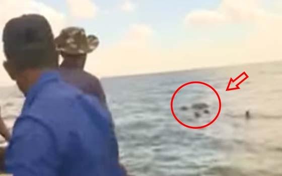 Video gajah sesat berenang di tengah laut diselamatkan oleh tentera laut