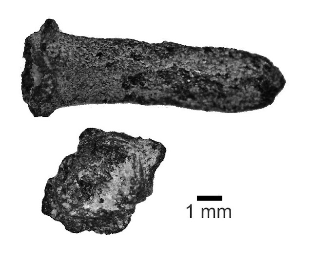 Earliest discovery of clove and pepper from ancient south Asia
