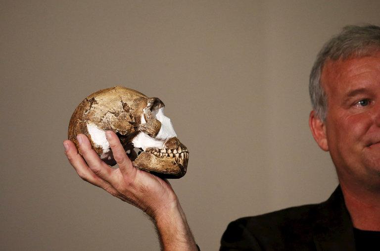 Cráneo de Homo naledi hallado en Rising Star Cave, Sudáfrica. Foto: NY Times.