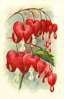 flower digital bleeding hearts image