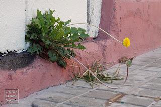 Fotografía de una flor nacida en la parte baja de una puerta en Valencia
