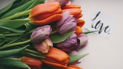 Tulips Offered From Love