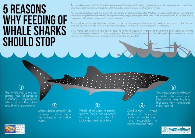 Tours para ver el tiburón ballena