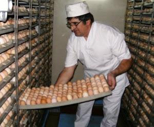 Incubatorul de oua