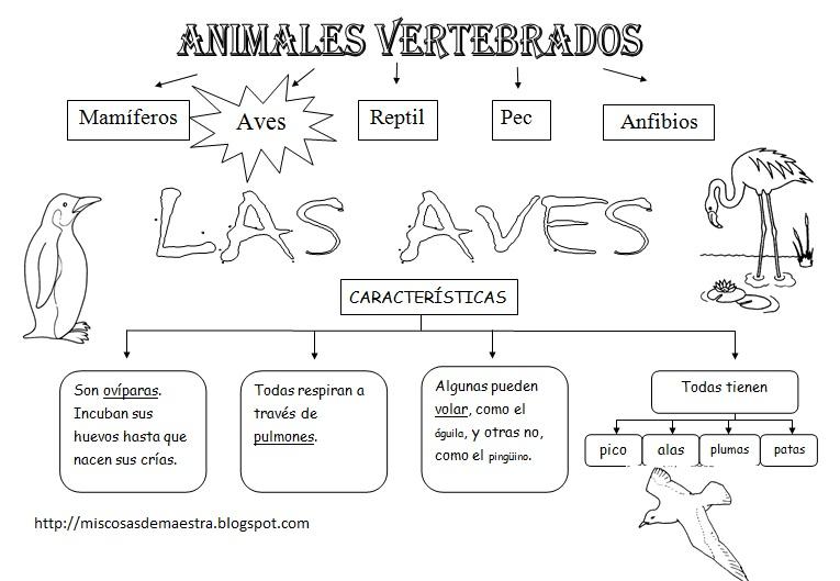 La aventura de aprender: ANIMALES VERTEBRADOS 1: LAS AVES