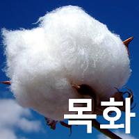 목화 가격 전망 : 면화 선물 단타 매매 전략 목표가 66.72 (+9.14 %) Cotton #2, ICE: CT