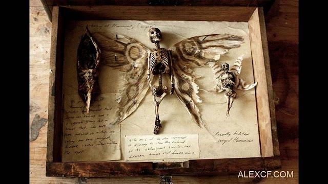Hadas y extraños tomos fueron encontrados en la antigua casa