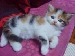 Nama Kucing Comel Jantan 81021 Nama Untuk Kucing Comel Lucu Dan Unik