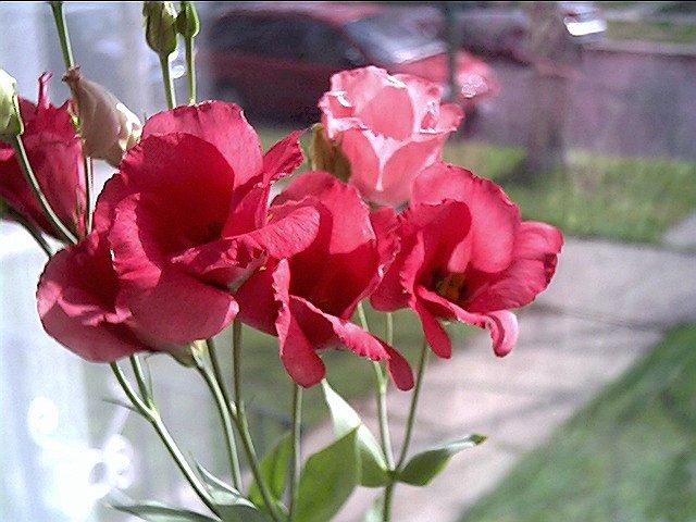 hoa cat tuong dep